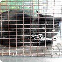 Adopt A Pet :: A490167 - San Bernardino, CA