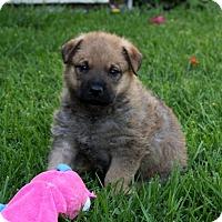 Adopt A Pet :: Gabriel - Mira Loma, CA
