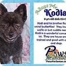 Adopt A Pet :: Kodi
