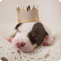 Adopt A Pet :: Bianca Del Rio - Greensboro, NC