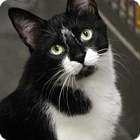 Adopt A Pet :: Fred - Dallas, TX