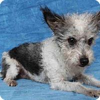 Adopt A Pet :: Nash - Encino, CA