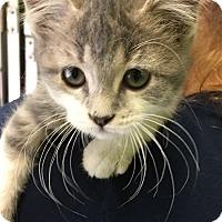 Adopt A Pet :: PEANUT - Hibbing, MN