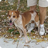 Blue Heeler/Jack Russell Terrier Mix Dog for adoption in Port Clinton, Ohio - Gunner