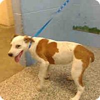 Adopt A Pet :: URGENT ON 11/5  San Bernardino - San Bernardino, CA