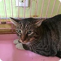 Adopt A Pet :: Monte - Hudson, NY