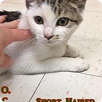 Adopt A Pet :: H-4 - Triadelphia, WV