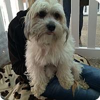 Adopt A Pet :: Blake - Thousand Oaks, CA