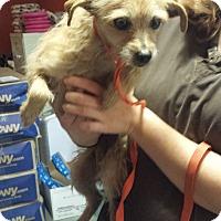 Adopt A Pet :: Fern - Westminster, CA