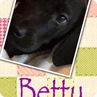 Adopt A Pet :: Betty - Effort, PA