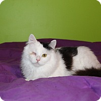 Adopt A Pet :: Zima - LaGrange, KY