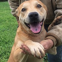 Adopt A Pet :: Dustin - Slidell, LA