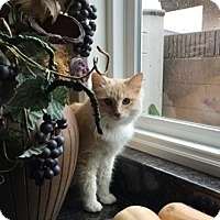 Adopt A Pet :: NALA - Brea, CA