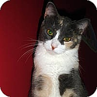 "Adopt A Pet :: Princess ""P"" - Round Rock, TX"