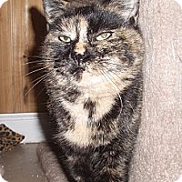 Domestic Shorthair Cat for adoption in Germansville, Pennsylvania - Karina