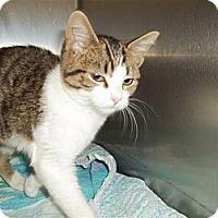 Adopt A Pet :: Gwenievere - McDonough, GA