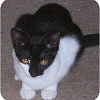 Adopt A Pet :: Marky & Mia - Portland, ME