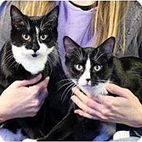 Adopt A Pet :: Brothers Tito and Jackie - Chicago, IL