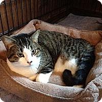 Adopt A Pet :: Ace - Byron Center, MI