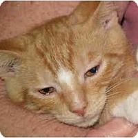 Adopt A Pet :: Butch - Port Republic, MD