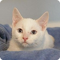 Adopt A Pet :: Jimmy - Sacramento, CA