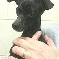 Adopt A Pet :: Elvira - Orlando, FL