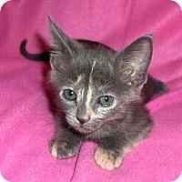 Adopt A Pet :: BJ - Richmond, VA