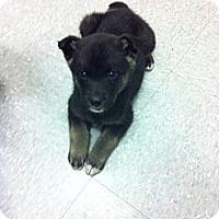 Adopt A Pet :: Taj - Saskatoon, SK