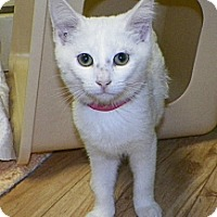 Adopt A Pet :: Cassie - Dover, OH