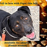 Adopt A Pet :: Pepsi - Seattle, WA