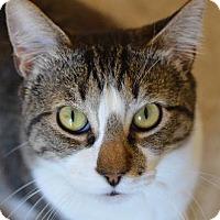 Adopt A Pet :: Apple Bee 13093 - Atlanta, GA