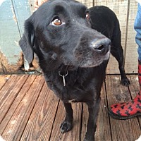 Adopt A Pet :: Cameran Adoption pending - East Hartford, CT
