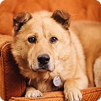 Adopt A Pet :: Jax - Portland, OR