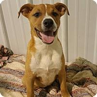 Adopt A Pet :: Sangria *PENDING* - Lima, OH
