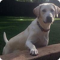 Adopt A Pet :: kelly - North Brunswick, NJ
