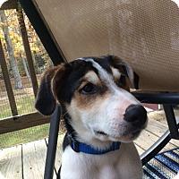 Adopt A Pet :: Hans - Richmond, VA