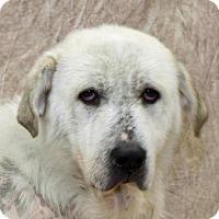 Adopt A Pet :: Ember - Modesto, CA