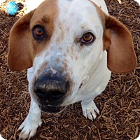Adopt A Pet :: Charlie - Blue Ridge, GA