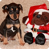Adopt A Pet :: Lazarus Michael - Salem, NH