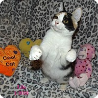 Adopt A Pet :: Lilo - Plain City, OH
