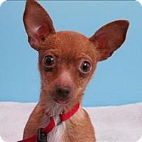 Adopt A Pet :: Rebecca - Portland, OR