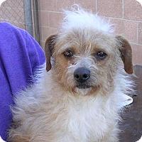 Adopt A Pet :: Susan - Yucaipa, CA