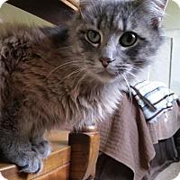 Adopt A Pet :: Sassafras - Wilmington, NC
