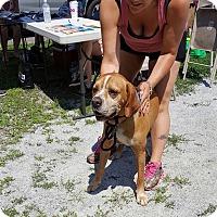 Adopt A Pet :: Clifford - Waterbury, CT