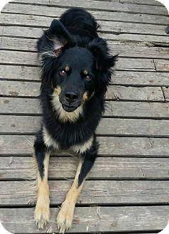 German Shepherd Dog Mix Dog for adoption in Winnipeg, Manitoba - CAIN