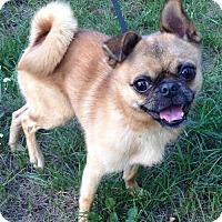 Adopt A Pet :: FRANK - Traverse City, MI