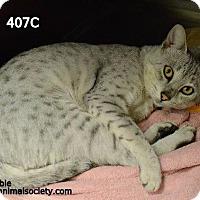 Adopt A Pet :: Yeti - Spring, TX