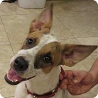 Adopt A Pet :: Reesey - St Petersburg, FL