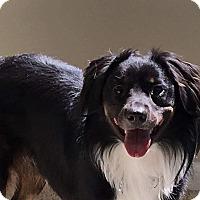 Adopt A Pet :: Einstein - Florence, KY