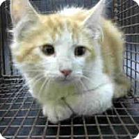 Adopt A Pet :: URGENT on 10/24 at DEVORE - San Bernardino, CA